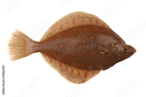 Fotografie, Tablou Plaice Fish