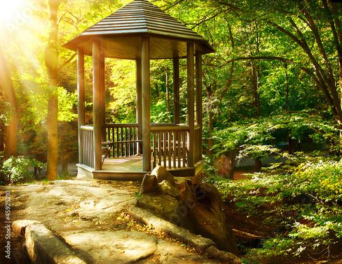 Fotografia, Obraz Arbor in Autumnal Park. Landscaping