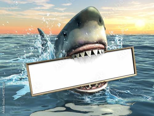 Fototapeta premium Reklama rekina