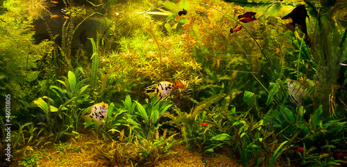 Ttropical freshwater aquarium with fishes #46011805