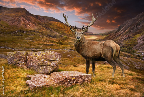 Wallpaper Mural Red deer stag in moody dramatic mountain sunset landscape