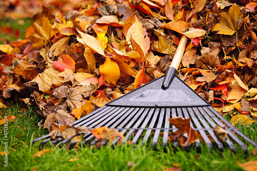 Fall leaves with rake Fototapeta