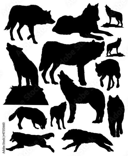 Canvas Print wolves vector