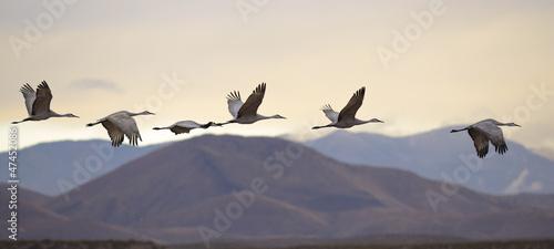 Canvas-taulu Flying cranes
