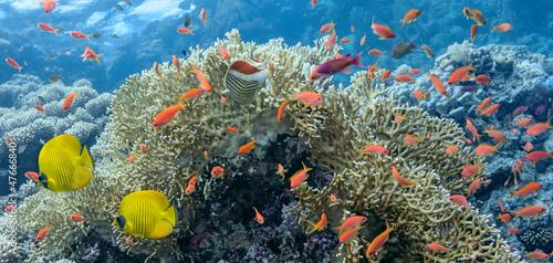 Coral scene - panorama #47666840