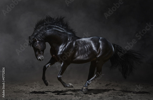 Canvas Print Galloping black horse on dark background