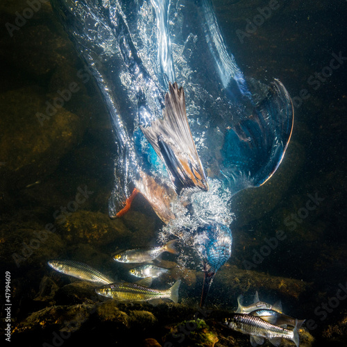 Wallpaper Mural Kingfisher catch the fish - under water photo