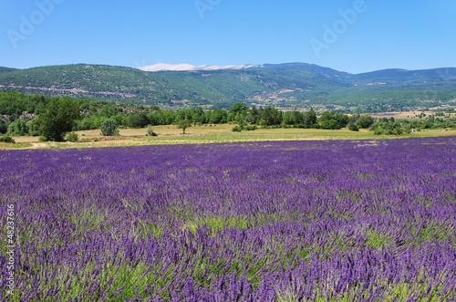 Fototapeta premium Mont Ventoux 25
