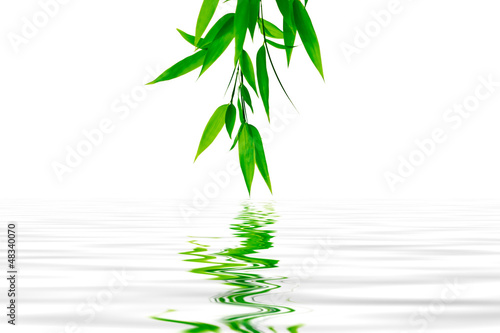 The bamboo branch in the water