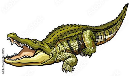 Photo nile crocodile