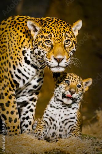 Jaguar Cubs #49545453