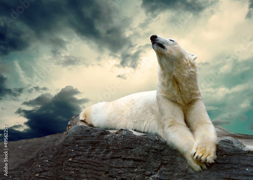 Fototapeta White Polar Bear Hunter on the Ice in water drops.