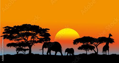 Fotografie, Obraz African savanna