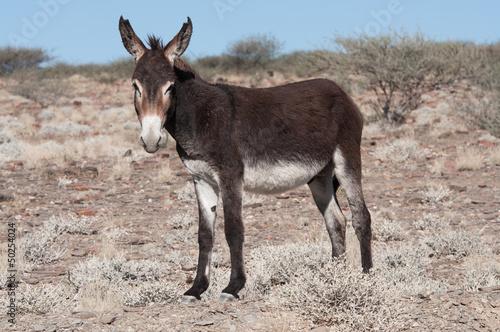 Valokuva Standing donkey