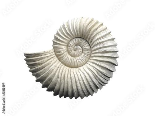 Murais de parede Seashell
