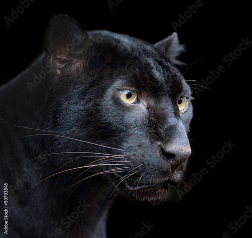 Obraz na plátně Black Panther