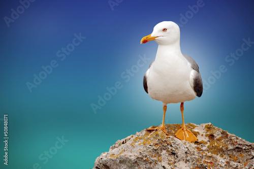 Photo beautiful seagull with a beautiful sky and sea on the horizon