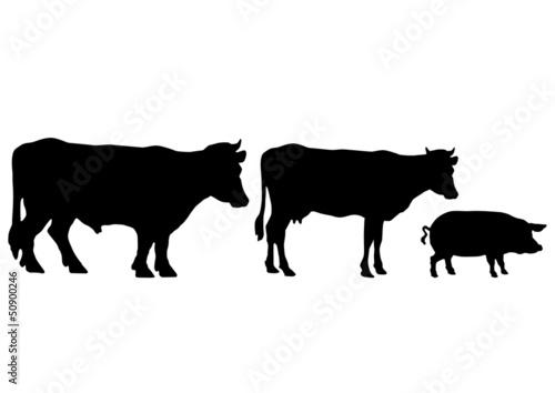 Wallpaper Mural boeuf vache cochon
