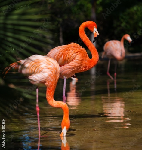 Group of pink flamingos near water #51178834