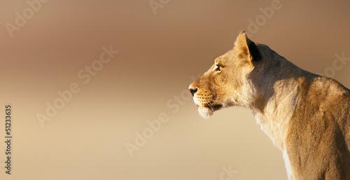 Stampa su Tela Lioness portrait