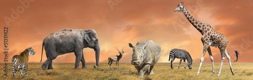 Obraz na płótnie Kolekcja dzikich zwierząt sawanny