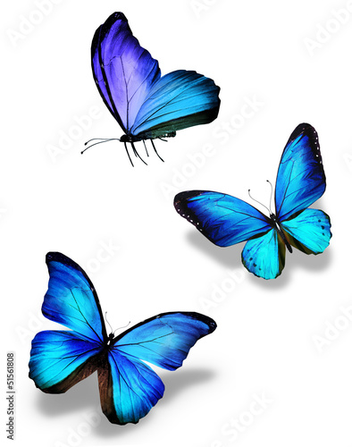 Three blue butterflies, isolated on white #51561808
