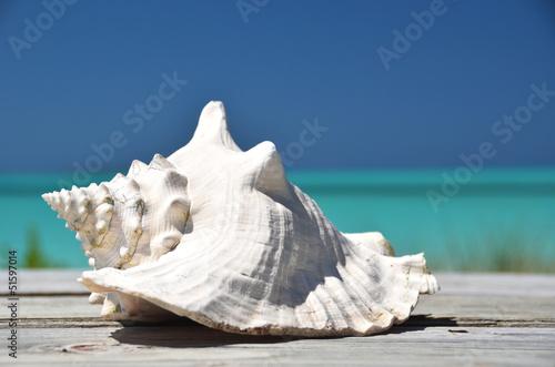 Leinwand Poster Conch against ocean. Exuma, Bahamas