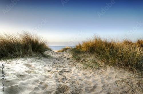 Tableau sur Toile Chemin à travers les Dunes