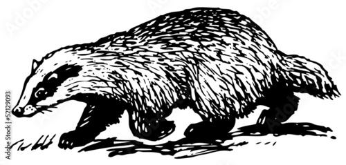 Fotografija European Badger