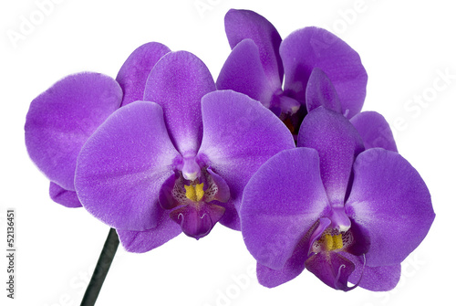 Photo branch orchid