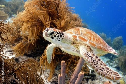 Wallpaper Mural Green Sea Turtle