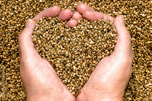 Hemp seeds held by woman hands shaping a heart on a hemp seed background