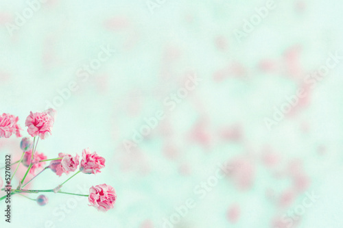 Pink baby's breath flowers with copy space
