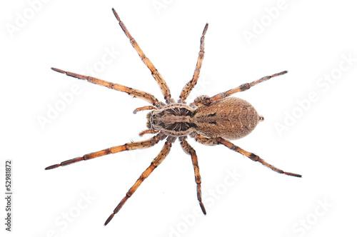 Foto Spider