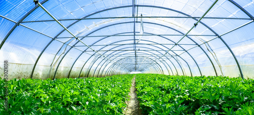 Canvas-taulu growing vegetables in a greenhouse