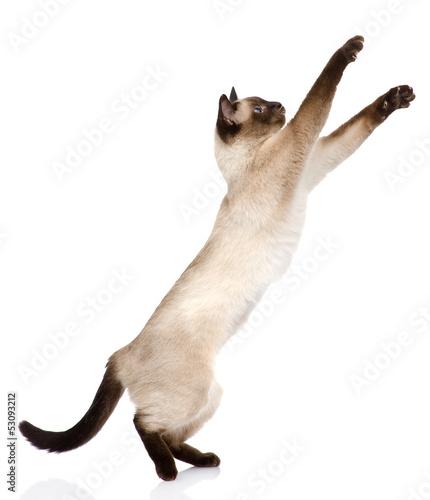 Fotografia playful funny kitten. isolated on white background