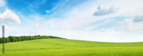 Obraz na płótnie green meadow and blue sky