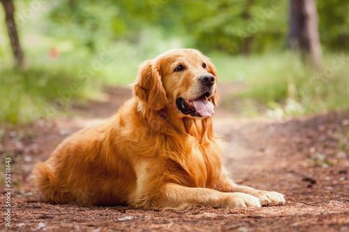 Obraz na płótnie Portrait of a  dog