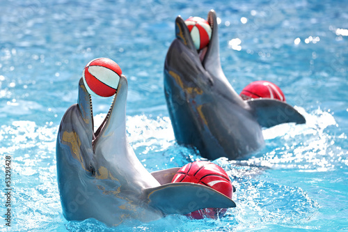 Fotomural dolphins with a ball