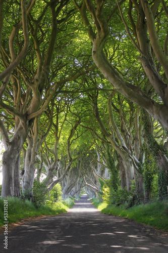 Magical woods of Dark Hedges #53315281