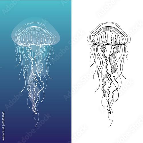 Obraz na plátně Jellyfish1