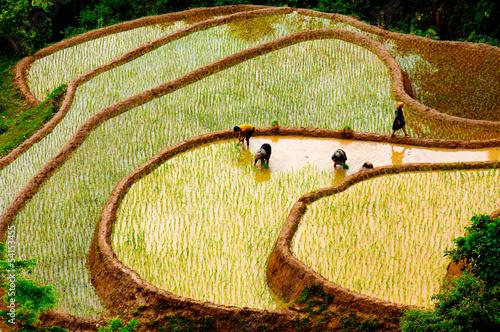 Rice fields of terraced in Vietnam Fototapeta