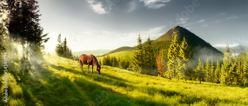Stampa su Tela Horse on a summer pasture in the mountains