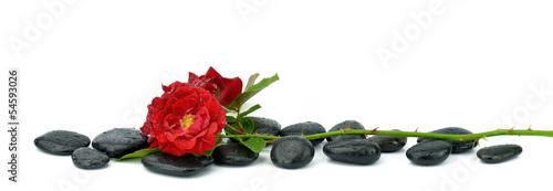 Róże na kamieniach do spa