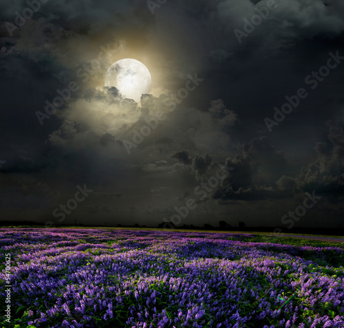 Photo Lavender field in the moonlight