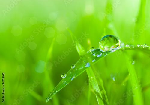 Stampa su Tela dews on grass
