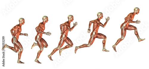 Canvas Print Muskelstudie beim Ansatz zum Sprung