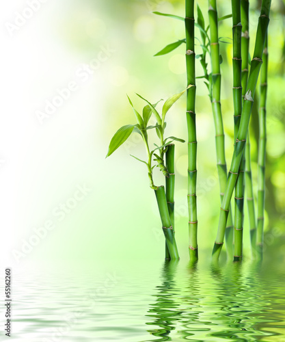 bamboo stalks on water