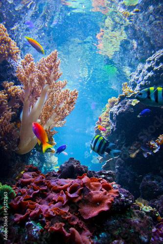 Cuadros en Lienzo Escena bajo el agua con los peces, los arrecifes de coral