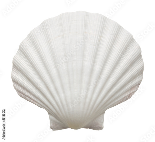 Fotografering Close up of ocean shell isolated on white background